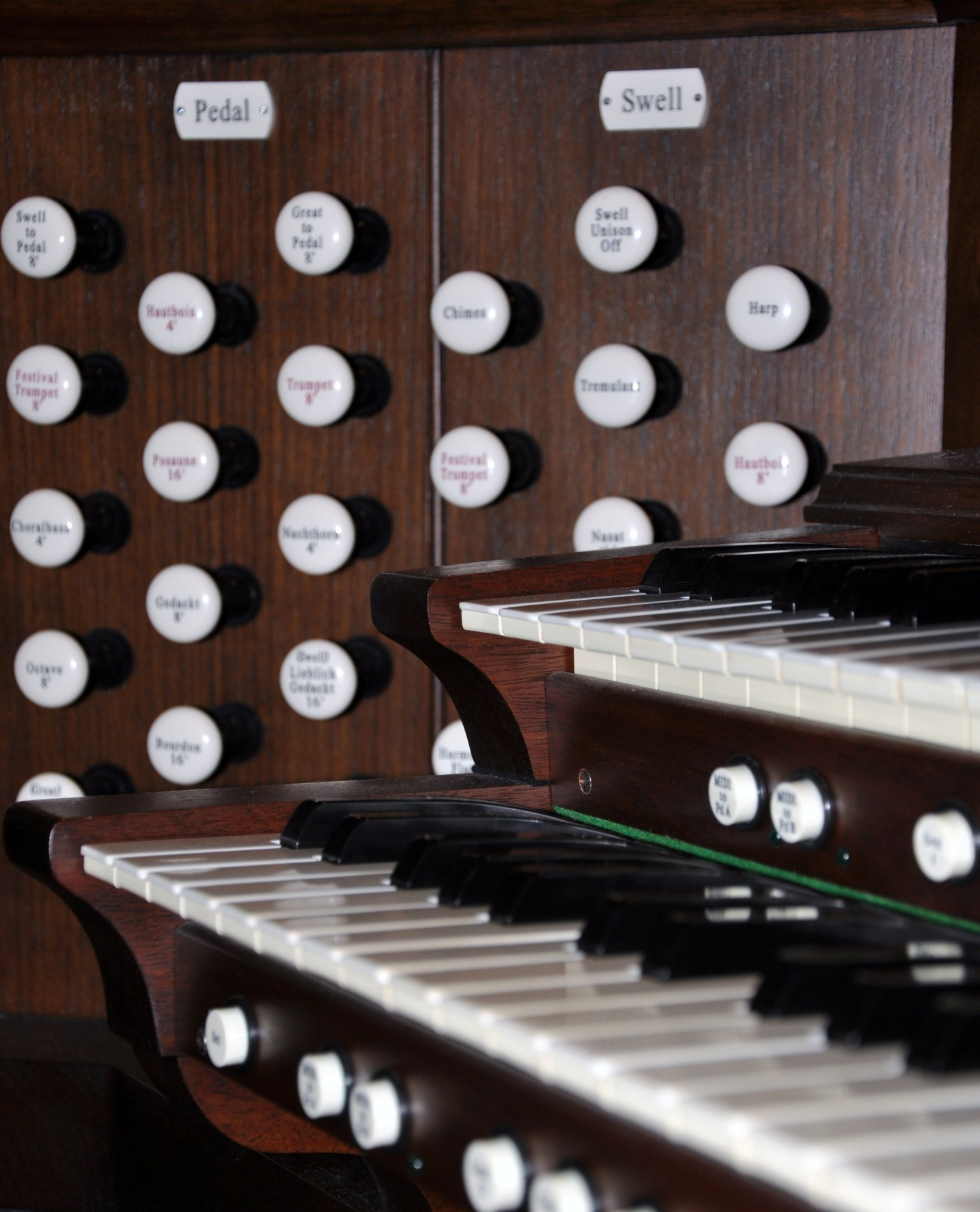 organ pic